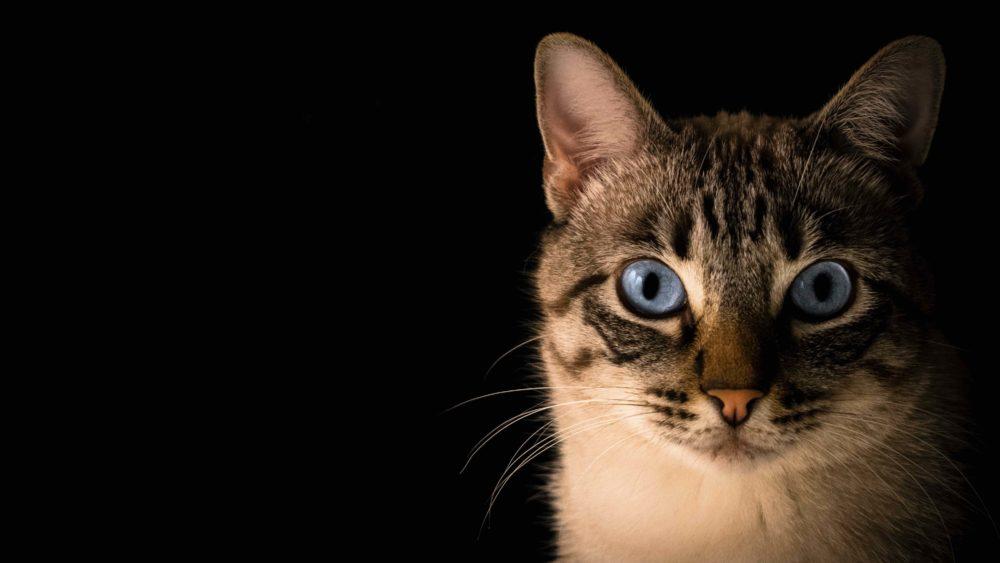 Dois-je souscrire une assurance santé pour mon animal de compagnie ?